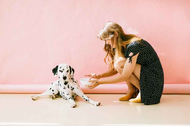 white and black dalmatian dog sitting in front of woman near wall